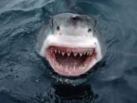 В Крыму пройдет чемпионат по ловле хищной рыбы