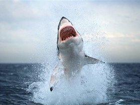 Нападения акул на туристов