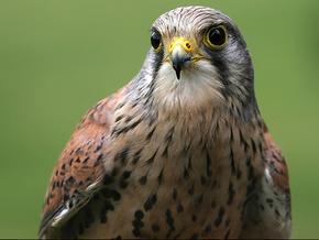 Красный список Закарпатья пополнили 77 видов животных